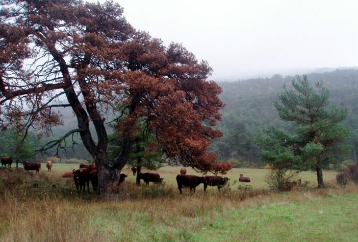 valderoure_ferme-terre-de-liens_72.jpg
